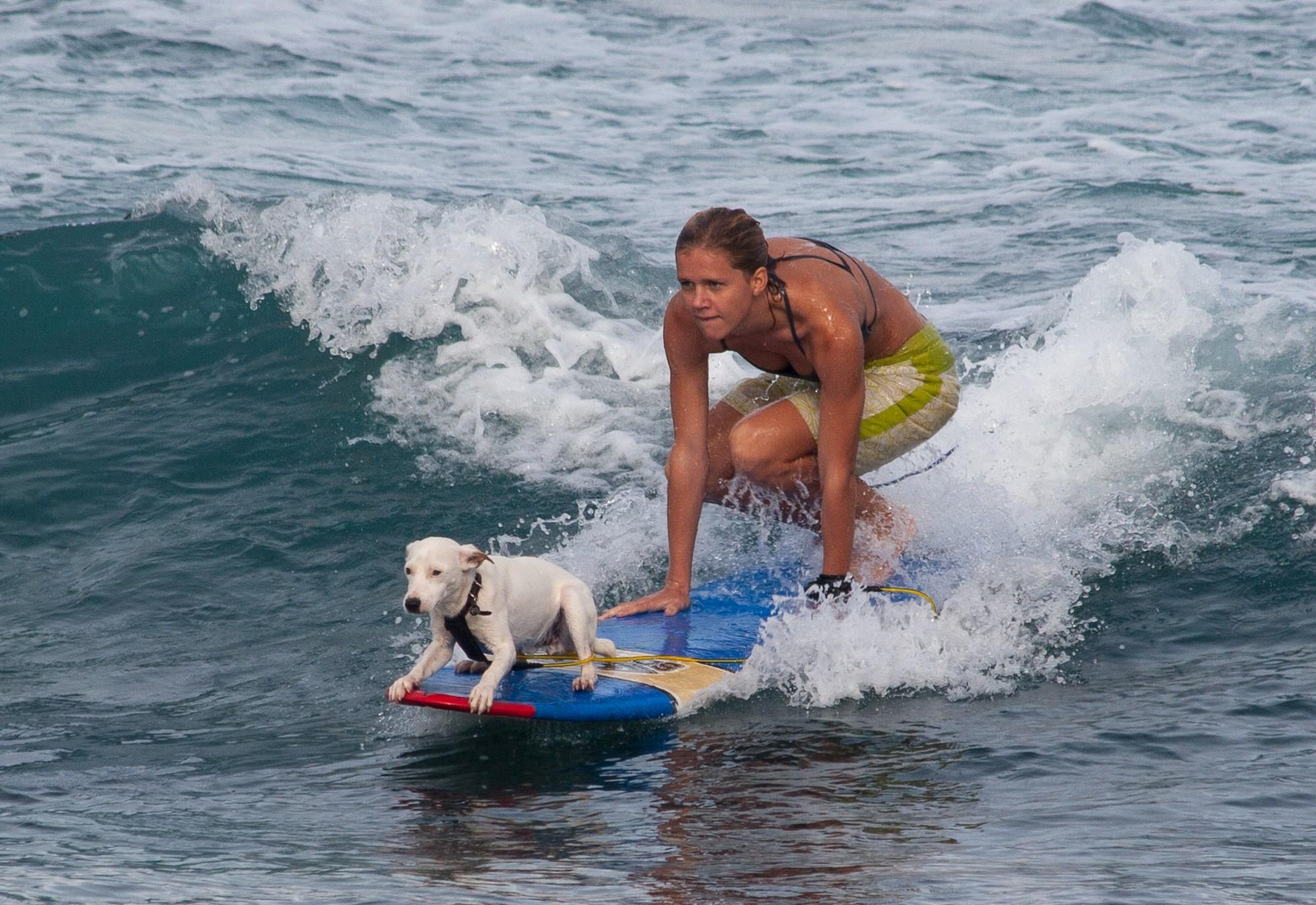 Dog Friendly Beaches Boca Raton Florida