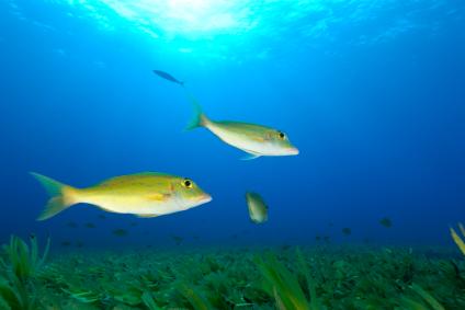 fishy_424