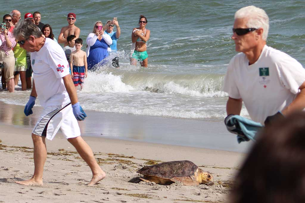 Releasing Sea Turtles back into the wild