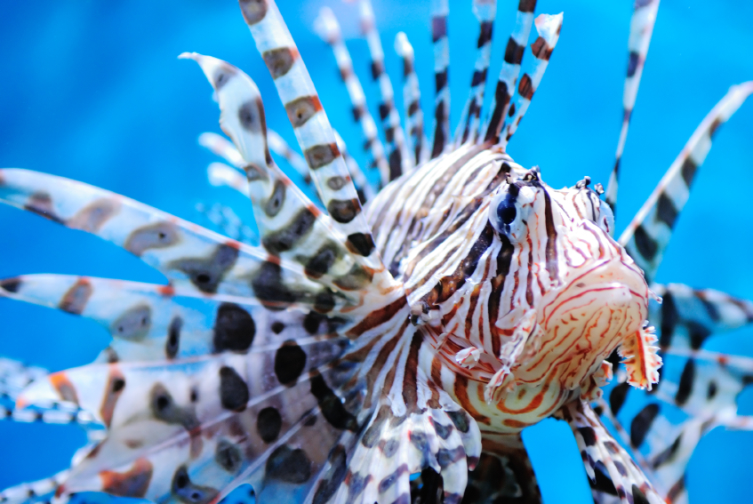 The Lionfish Derby at Sailfish Marina