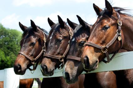 Miami Beach Horse Show