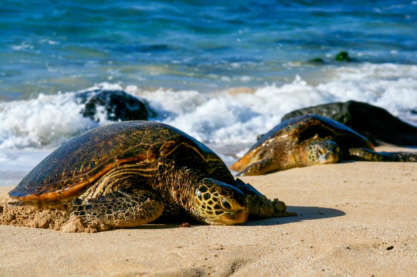 Sea Turtle Place West Palm Beach