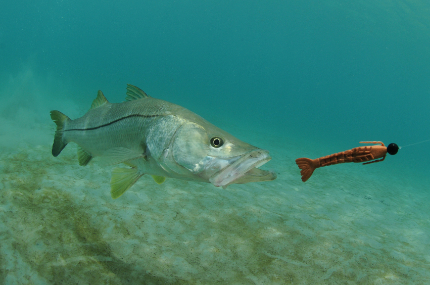 Winter Fishing in Florida