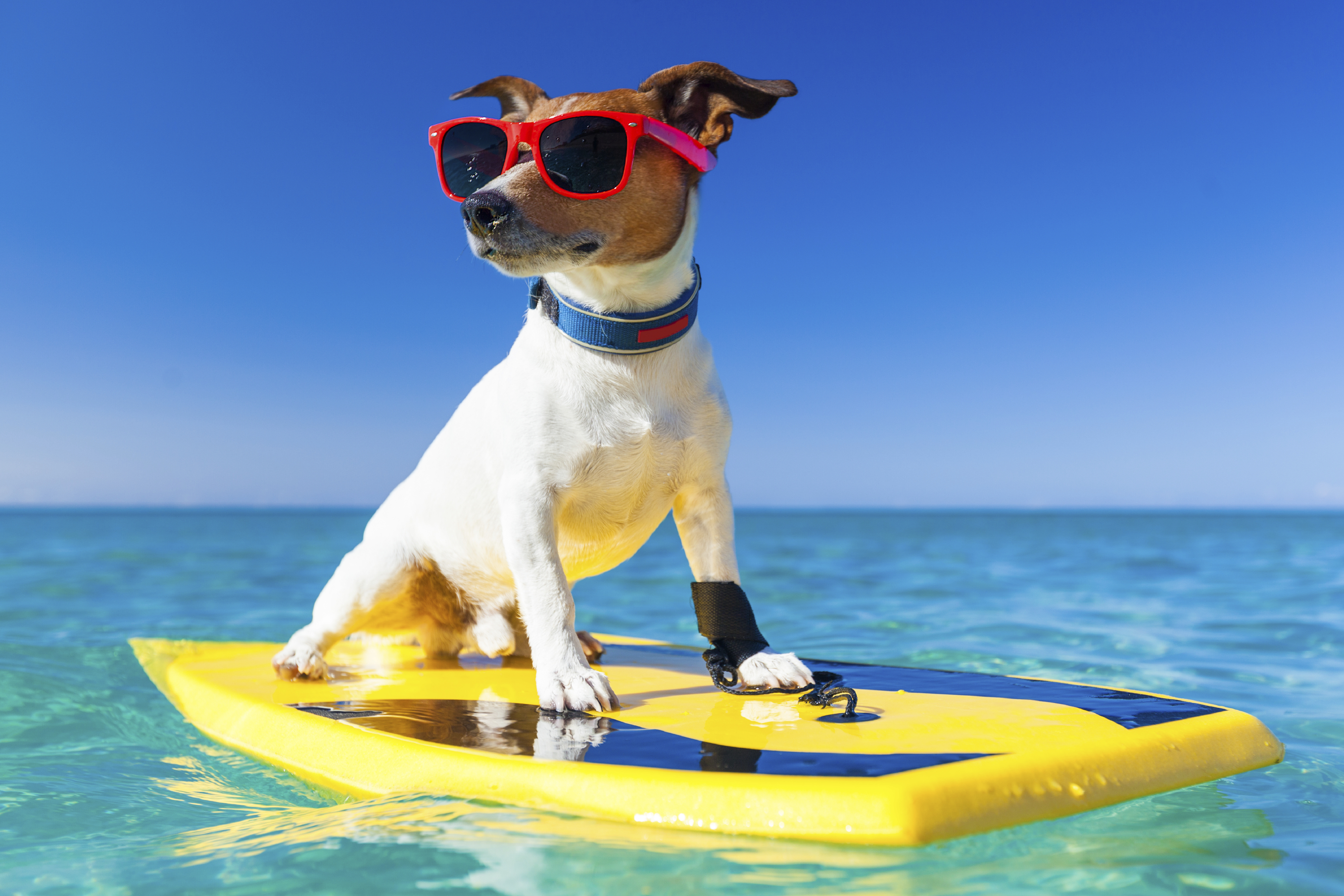 The 2nd Hang 20 Surf Dog Classic