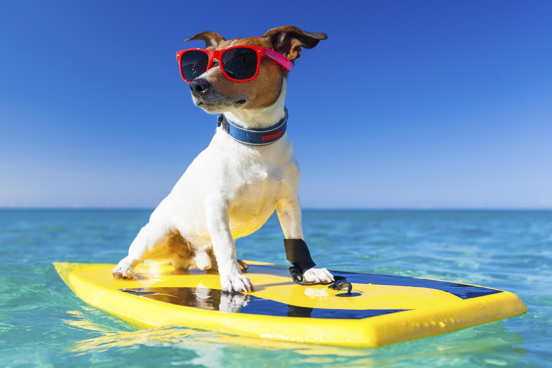 Dog Friendly Beaches for Summer Fun
