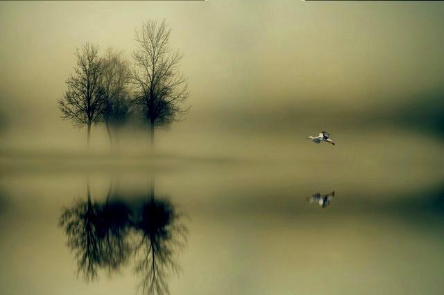 Ghost Of Loxahatchee River Jupiter