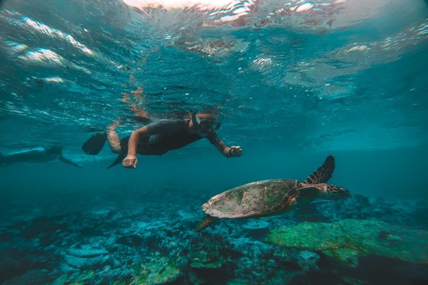 Go Snorkeling In The Palm Beaches