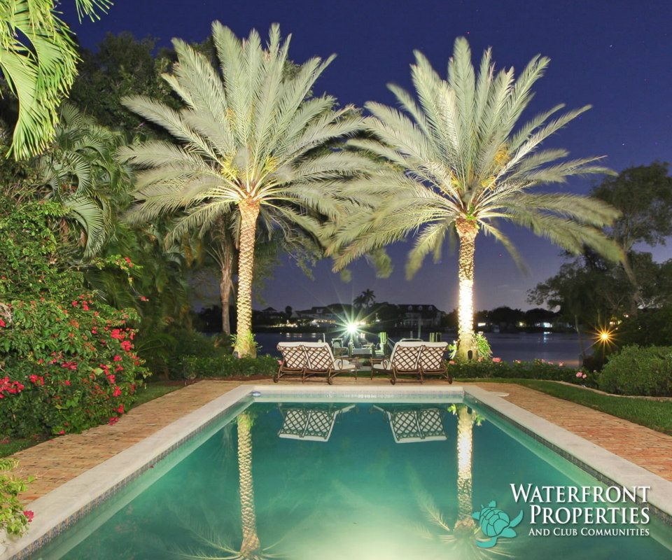 Beautiful Canary Palms Overlooking the Water