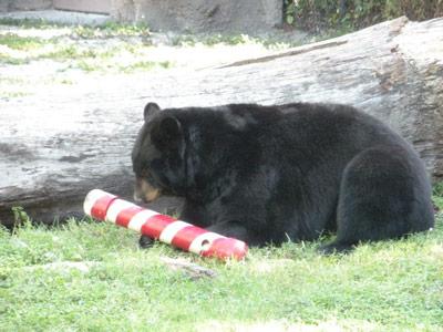Christmas at the Zoo!