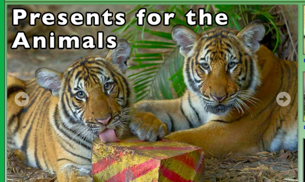 Christmas for the Animals