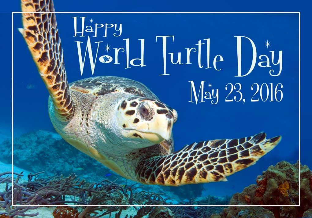 World Turtle Day!